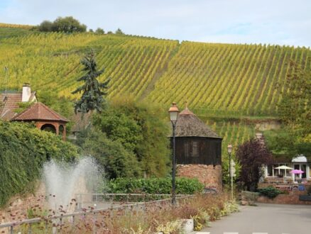 A typical Alsace landscape to take in when cycling on the rail trail