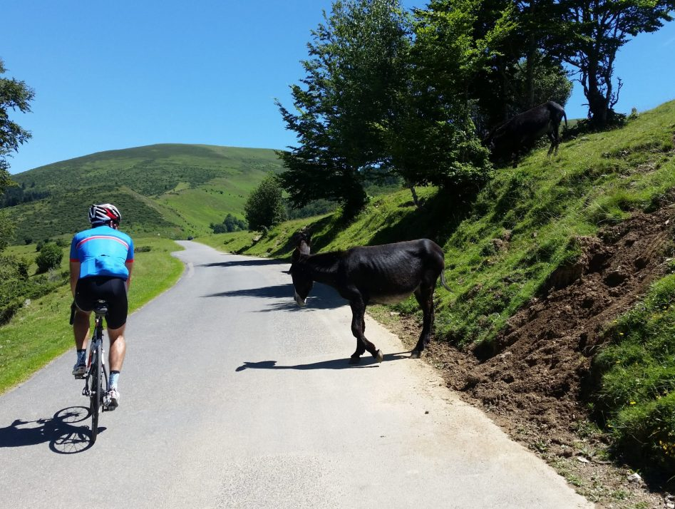 A rider cycling past a donkey on the climb of Hourquette d'Ancizan. A ride in the French Pyrenees