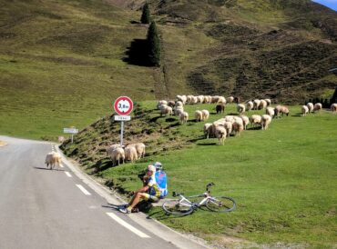 Two older cyclists resting on the road side at the Col du Soulor in the French Pyrenees, joined by a large flock of sheep.