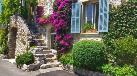 purple flowers covering the facade of a house