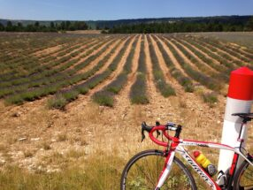 road bike in front of French lavender field