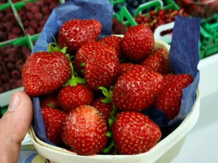 A basket of fresh strawberries from the markets in france